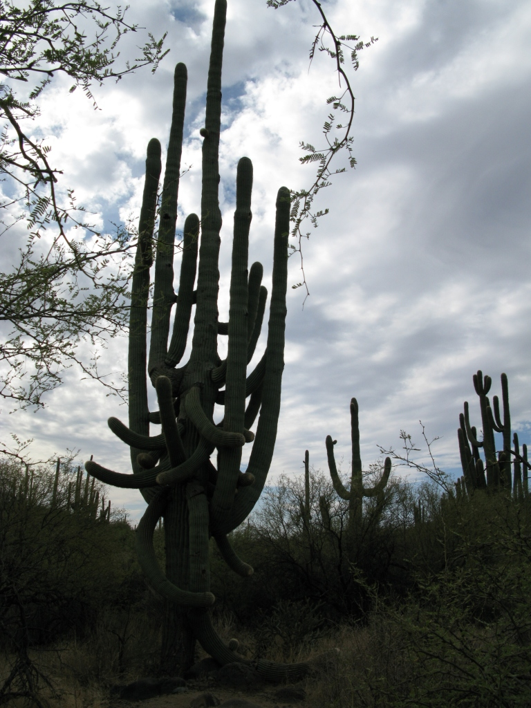 Metate Trail Saguaro Sprur Cross by Gary Fillmore
