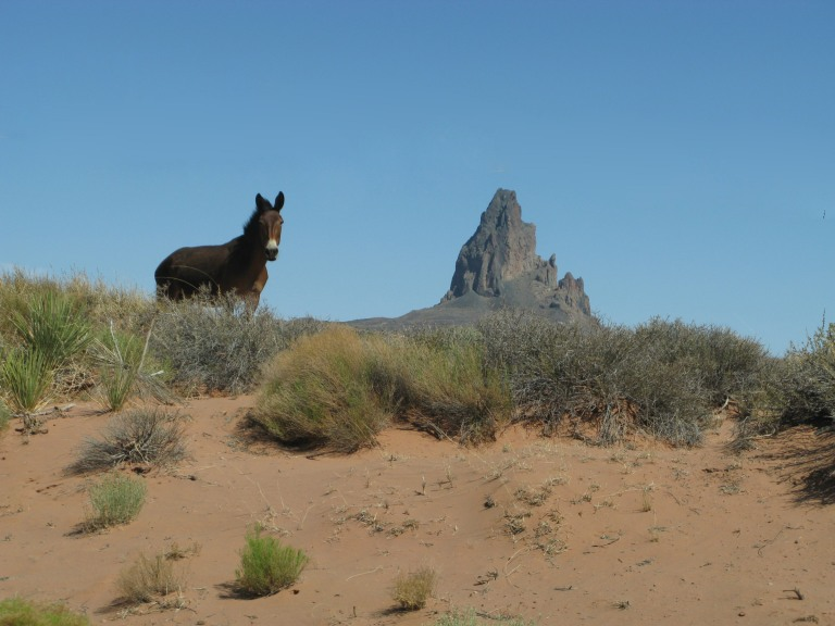 Wild Horse by Agathla Needle by Gary Fillmore