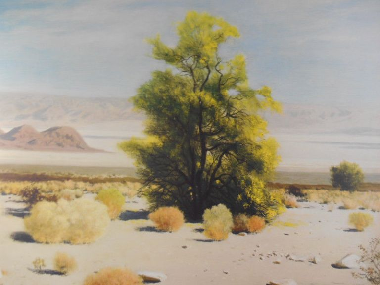 James Swinnerton Palo Verde in Bloom 2