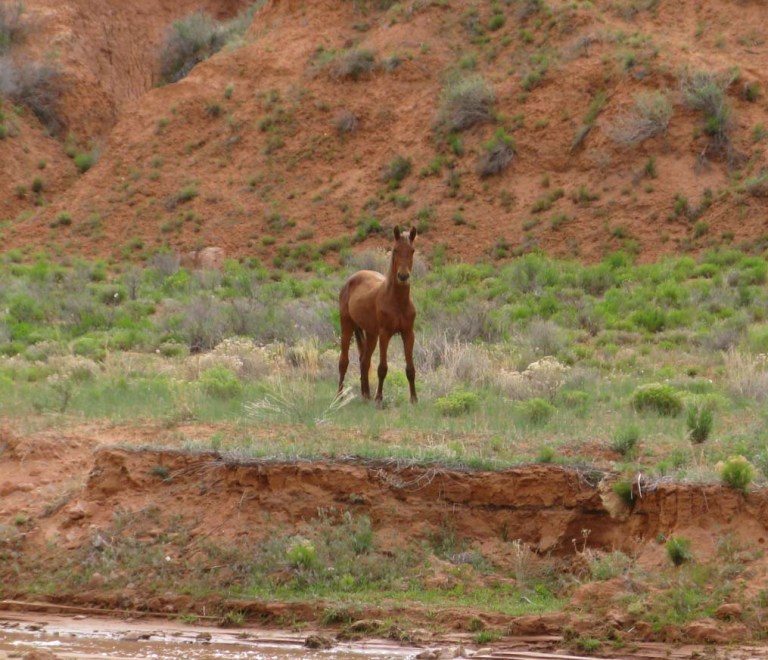 6Wild horse Keet Seel Canyon by Gary Fillmore