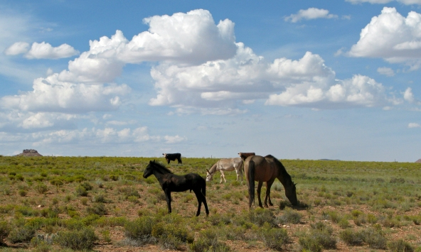 1Horses grazing on the Painted Desert by Gary Fillmore
